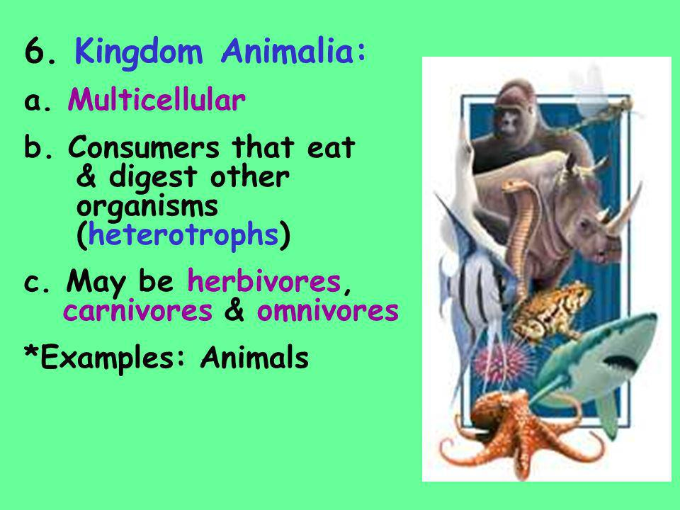 6. Kingdom Animalia: a. Multicellular