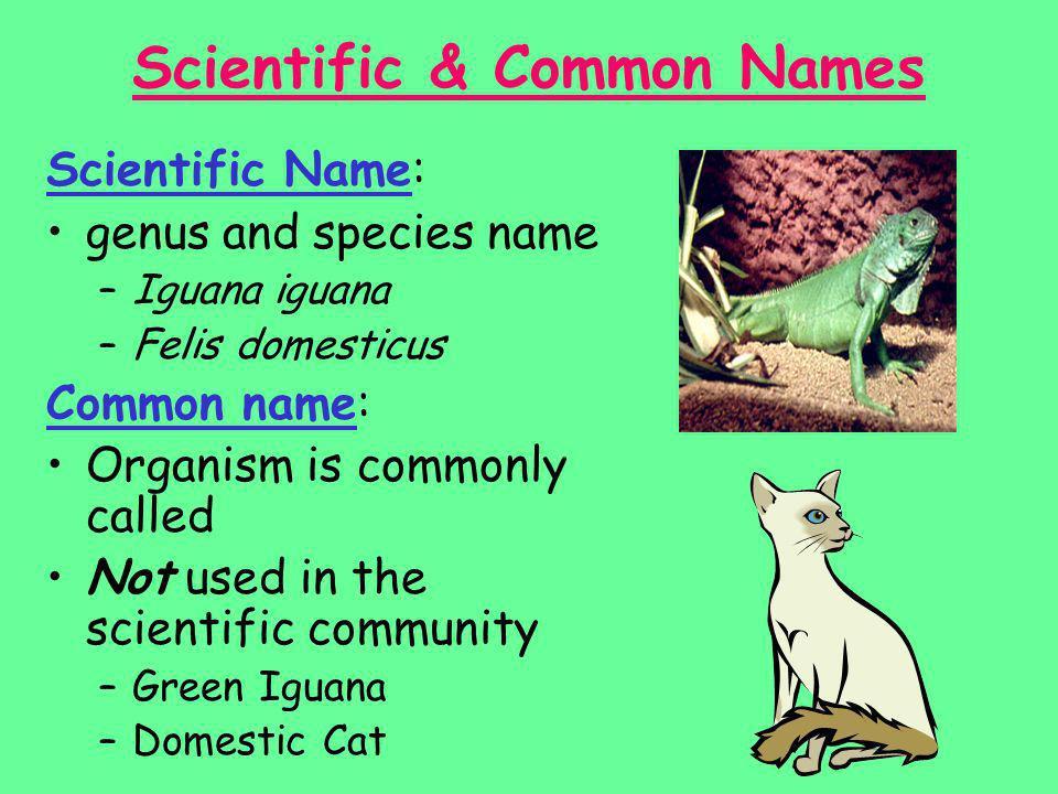 Scientific & Common Names