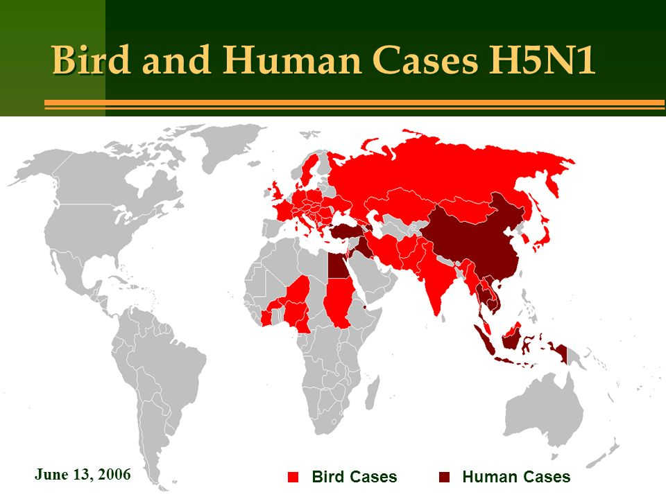 Bird and Human Cases H5N1 June 13, 2006 Bird Cases Human Cases