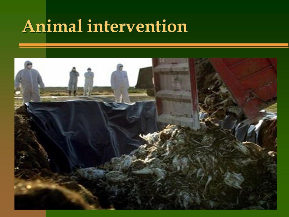 Animal intervention