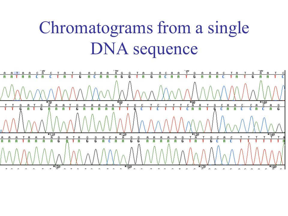 Chromatograms from a single DNA sequence