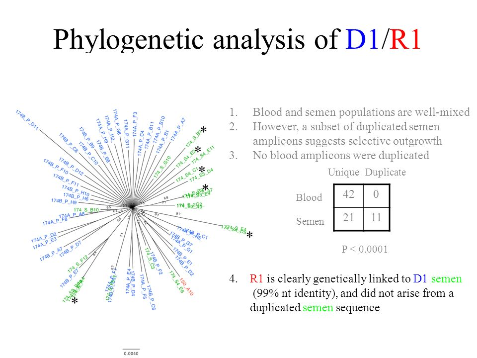 Phylogenetic analysis of D1/R1