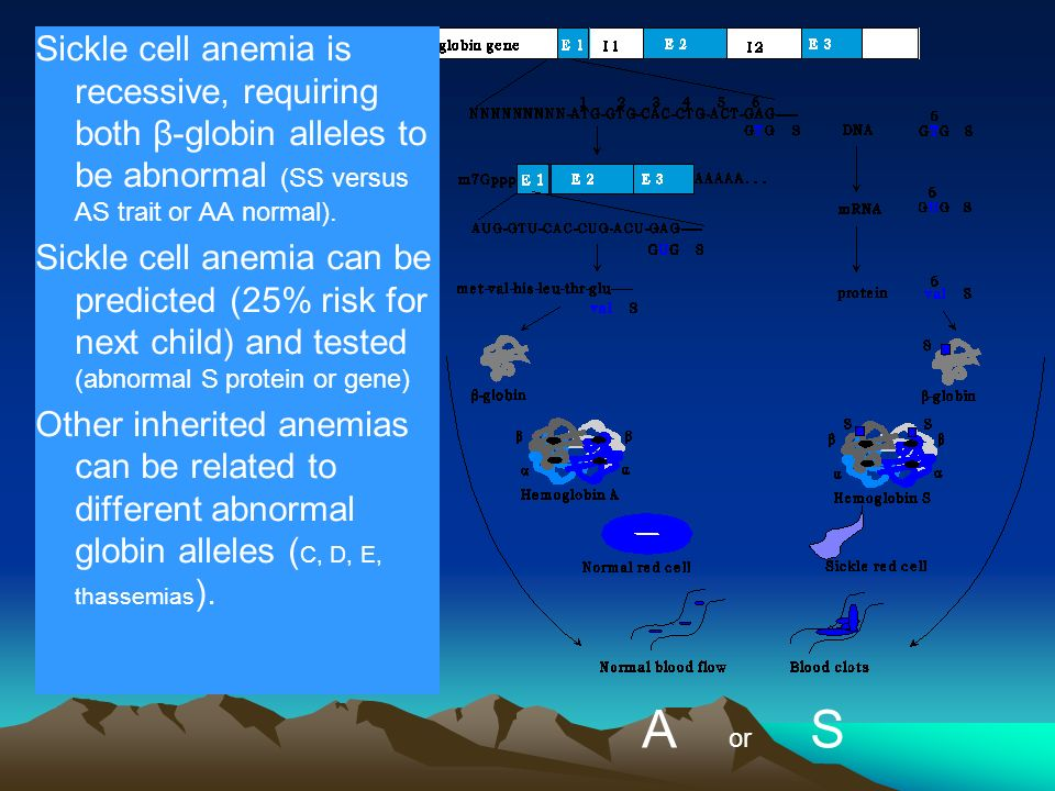 Sickle cell anemia is recessive, requiring both β-globin alleles to be abnormal (SS versus AS trait or AA normal).