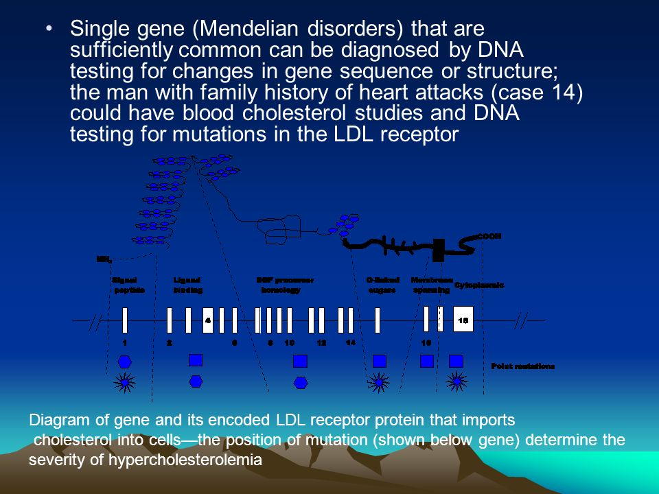 Single gene (Mendelian disorders) that are sufficiently common can be diagnosed by DNA testing for changes in gene sequence or structure; the man with family history of heart attacks (case 14) could have blood cholesterol studies and DNA testing for mutations in the LDL receptor