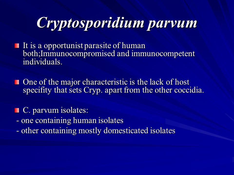 life cycle of cryptosporidium pdf