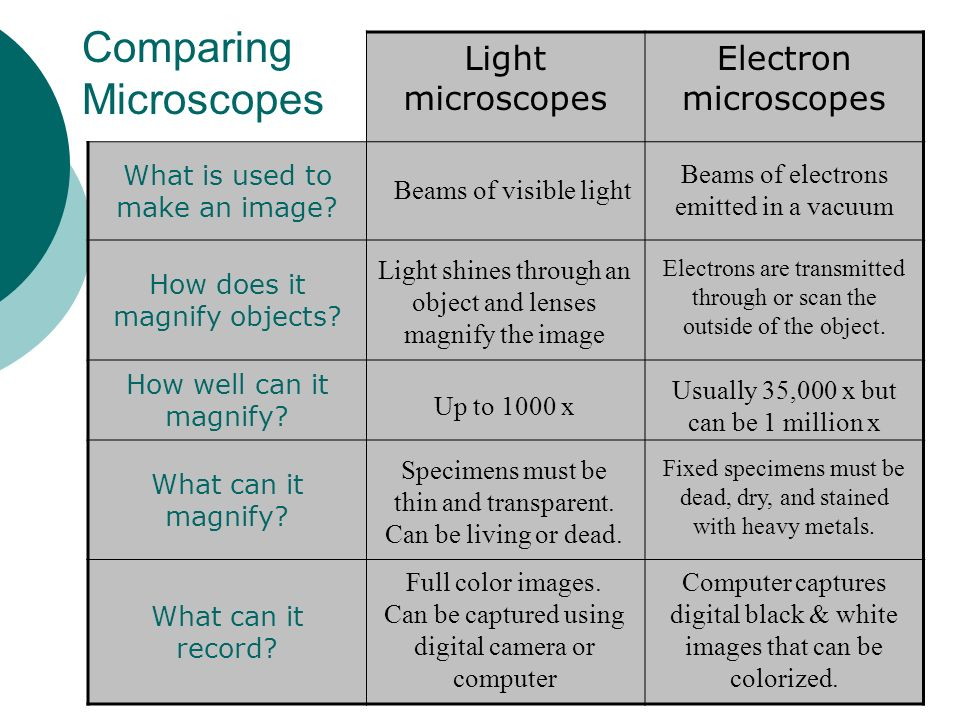 Comparison of light microscope and electron microscope