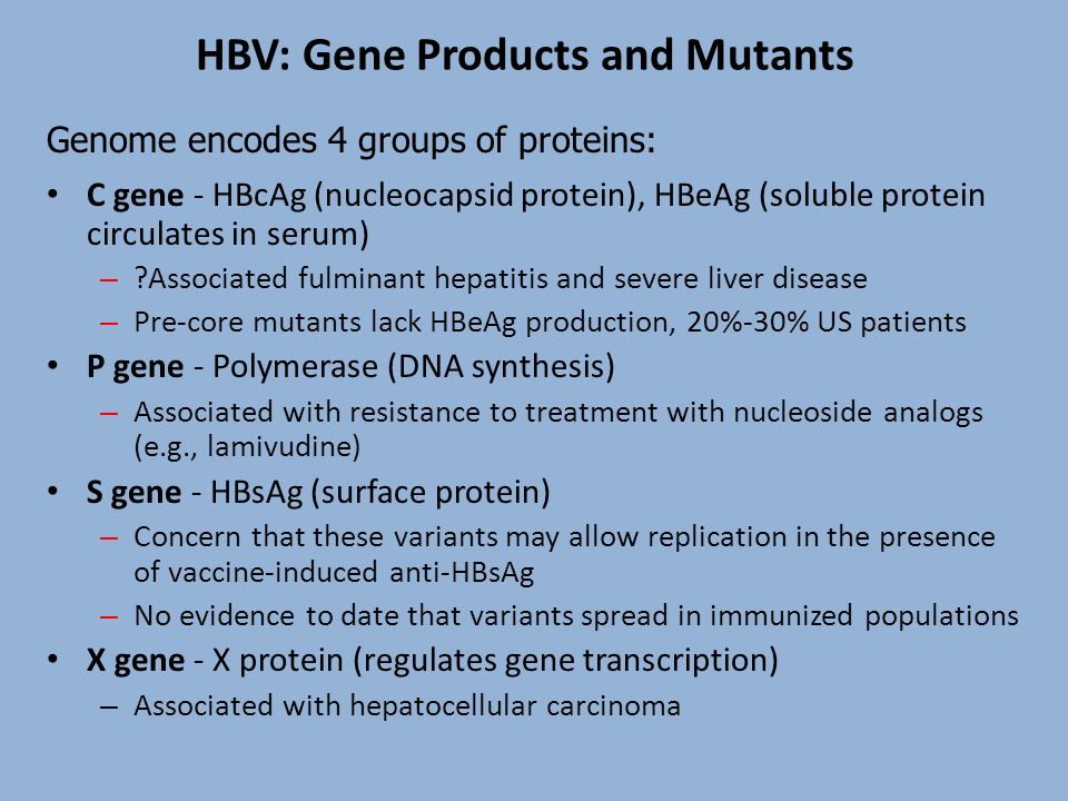 HBV: Gene Products and Mutants