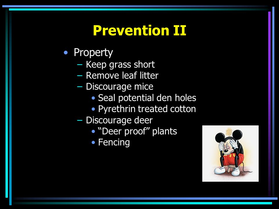 Prevention II Property Keep grass short Remove leaf litter