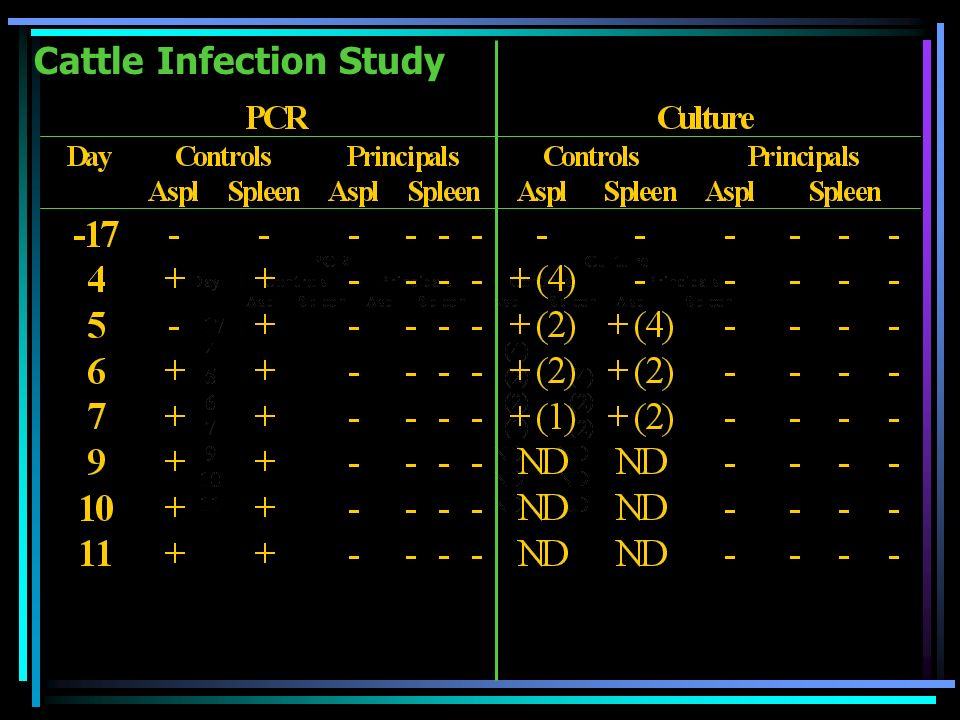 Cattle Infection Study