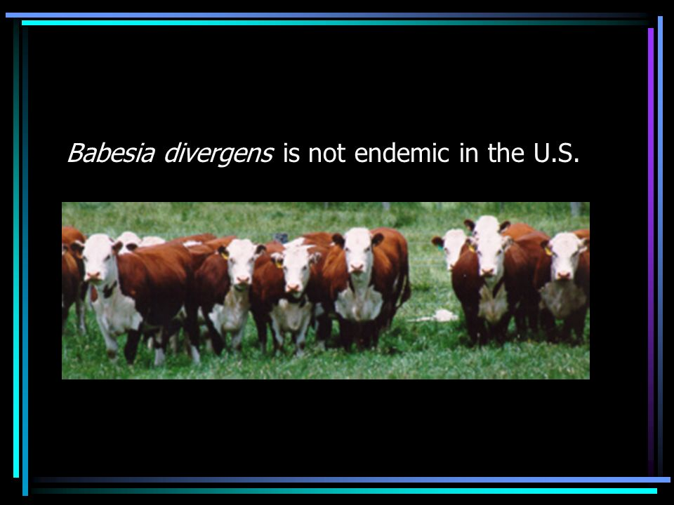 Babesia divergens is not endemic in the U.S.