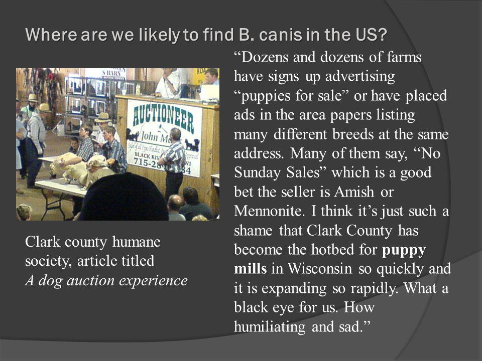Where are we likely to find B. canis in the US