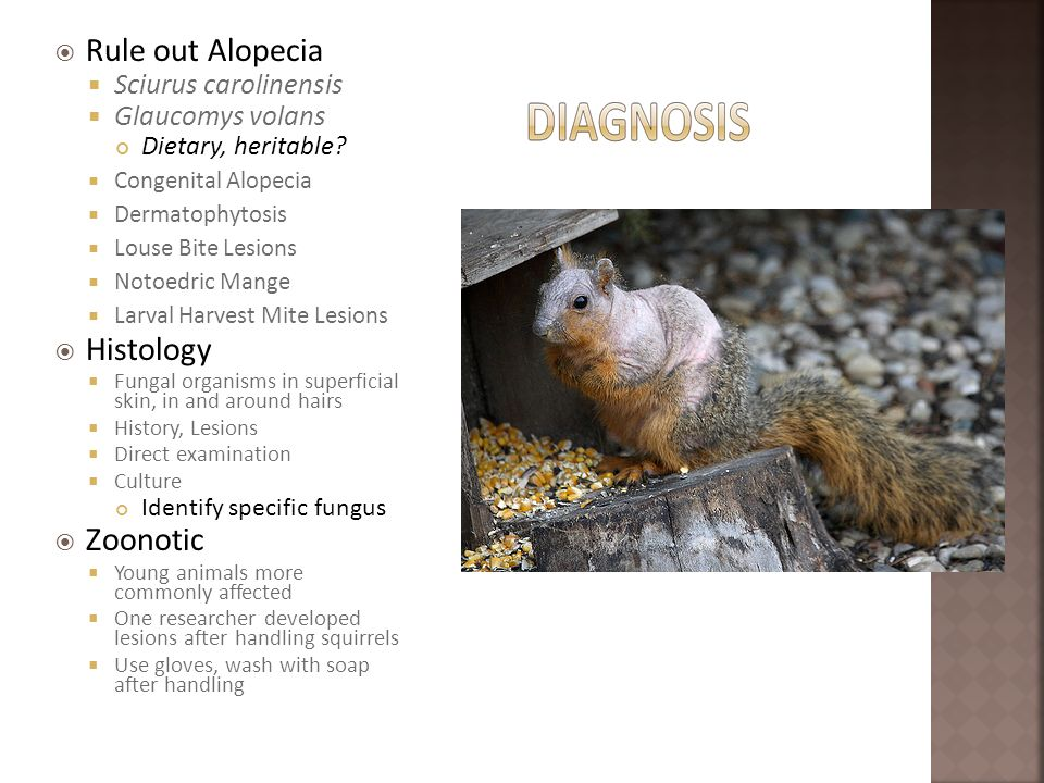 Rule out Alopecia Histology Zoonotic Sciurus carolinensis