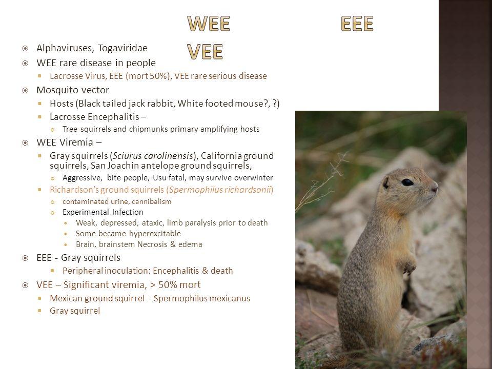 WEE EEE VEE Alphaviruses, Togaviridae WEE rare disease in people