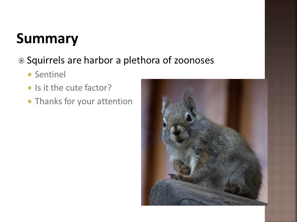 Summary Squirrels are harbor a plethora of zoonoses Sentinel
