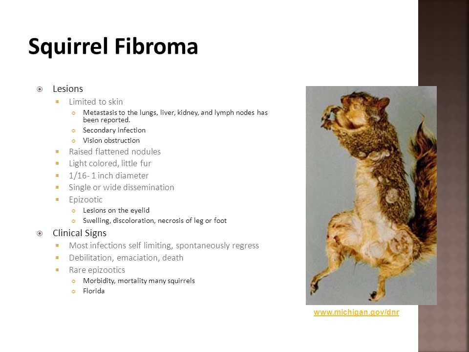 Squirrel Fibroma Lesions Clinical Signs Limited to skin