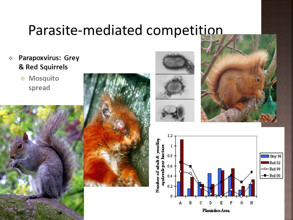 Parasite-mediated competition
