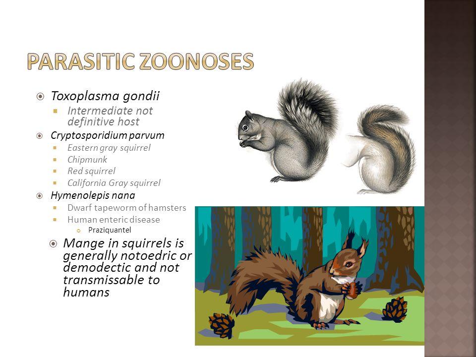Parasitic zoonoses Toxoplasma gondii
