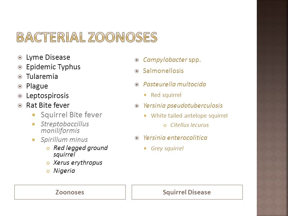 Bacterial Zoonoses Squirrel Bite fever Lyme Disease Epidemic Typhus