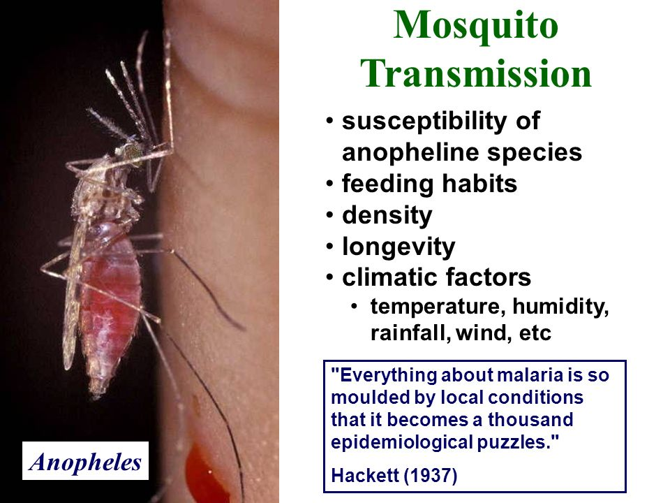 Mosquito Transmission