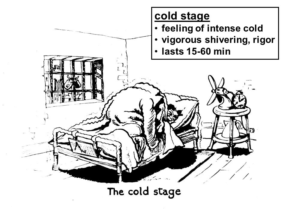 cold stage feeling of intense cold vigorous shivering, rigor