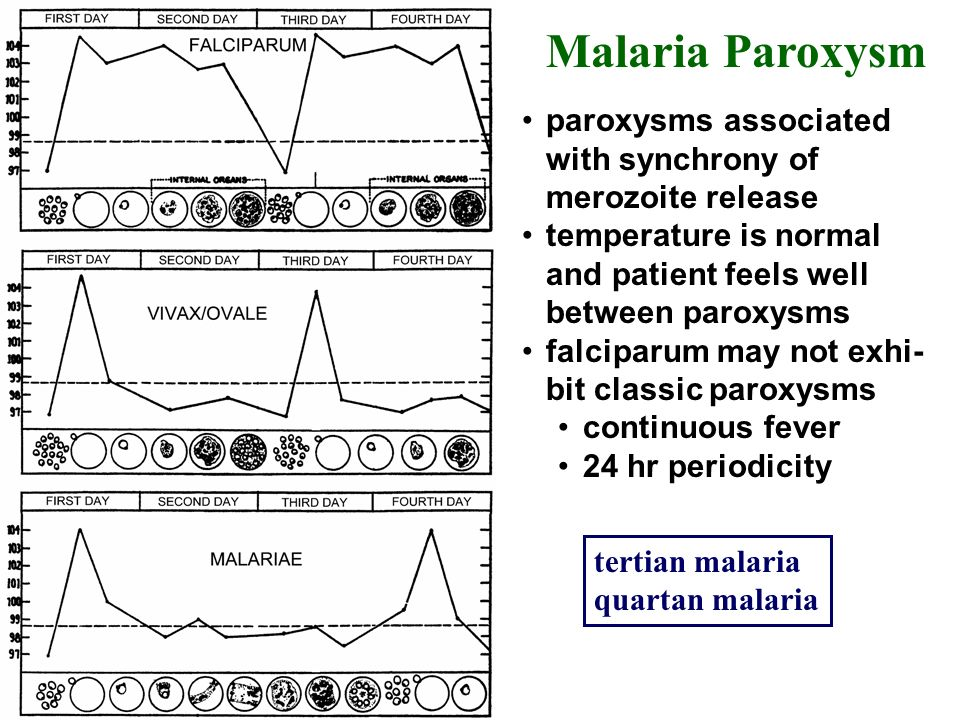 Malaria Paroxysm paroxysms associated with synchrony of merozoite release. temperature is normal and patient feels well between paroxysms.