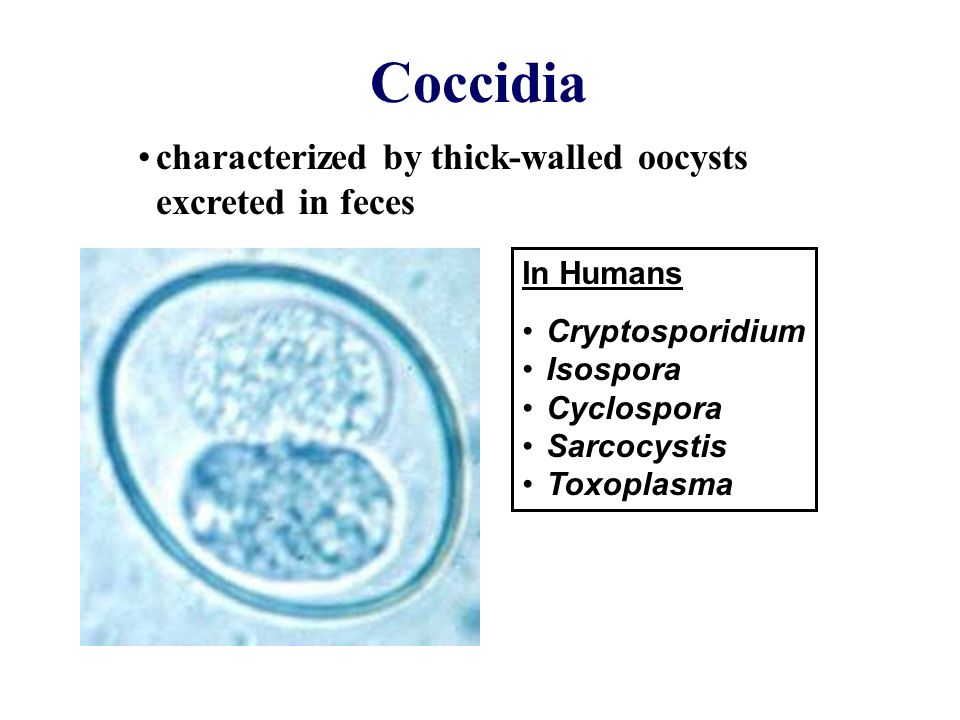 Coccidia characterized by thick-walled oocysts excreted in ...