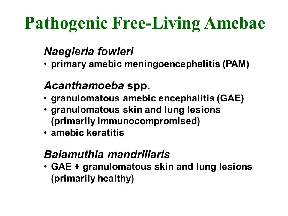 Pathogenic Free-Living Amebae