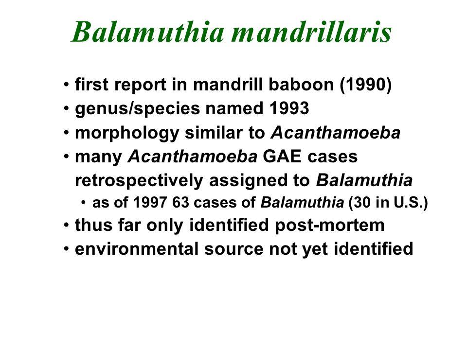 Balamuthia mandrillaris