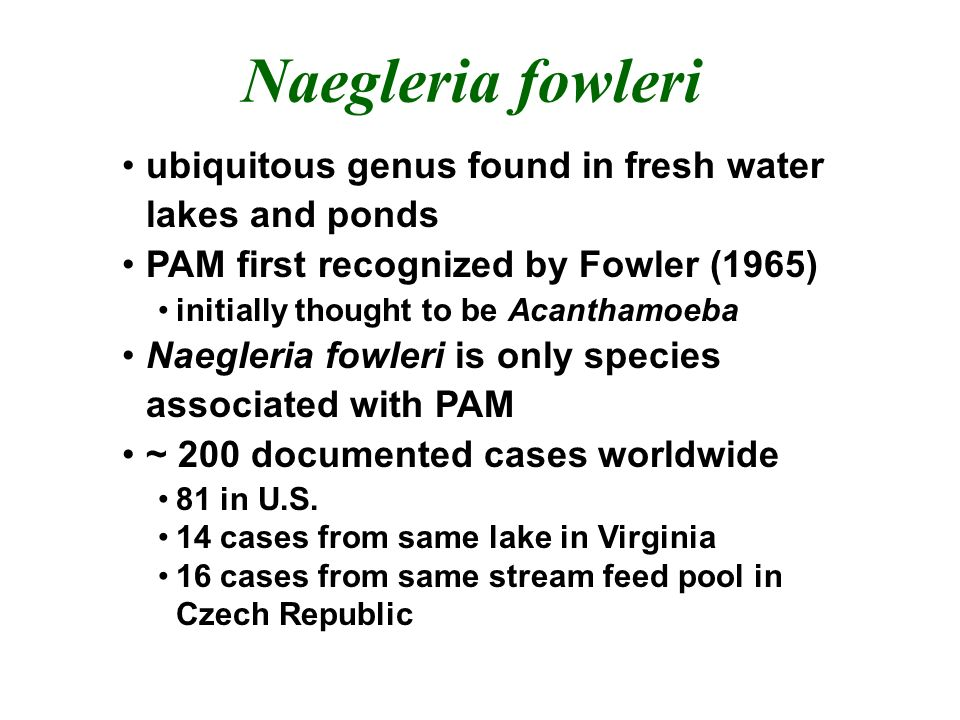 Naegleria fowleri ubiquitous genus found in fresh water lakes and ponds. PAM first recognized by Fowler (1965)