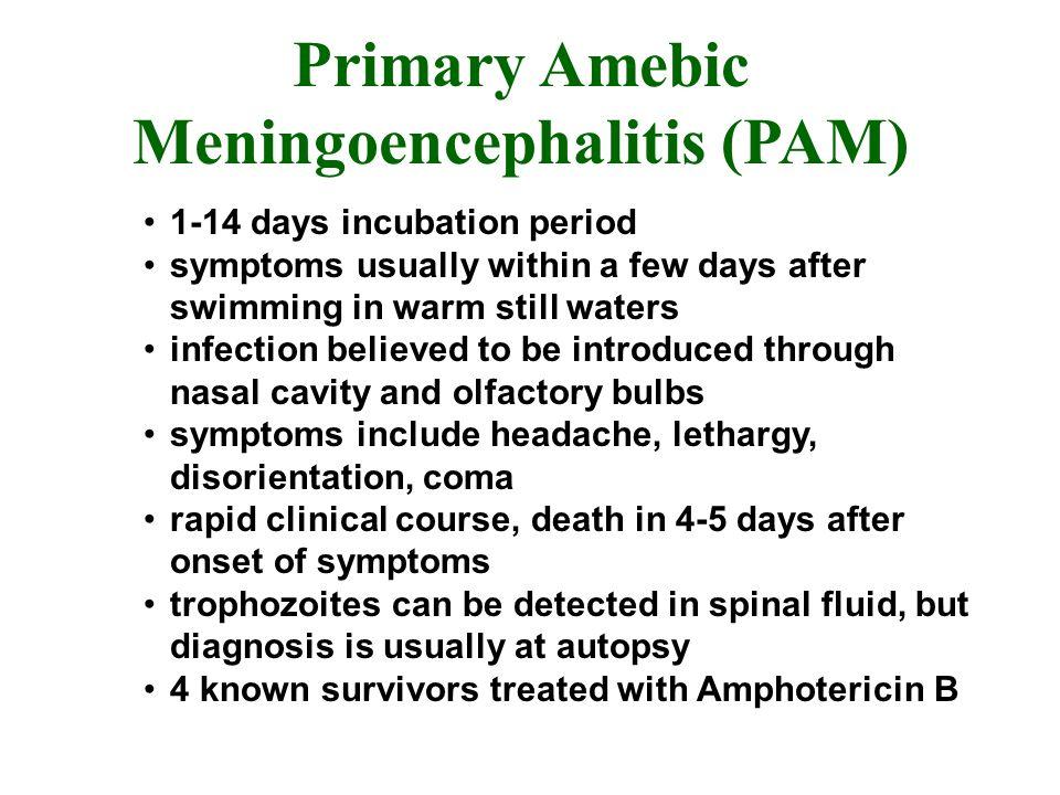 Primary Amebic Meningoencephalitis (PAM)