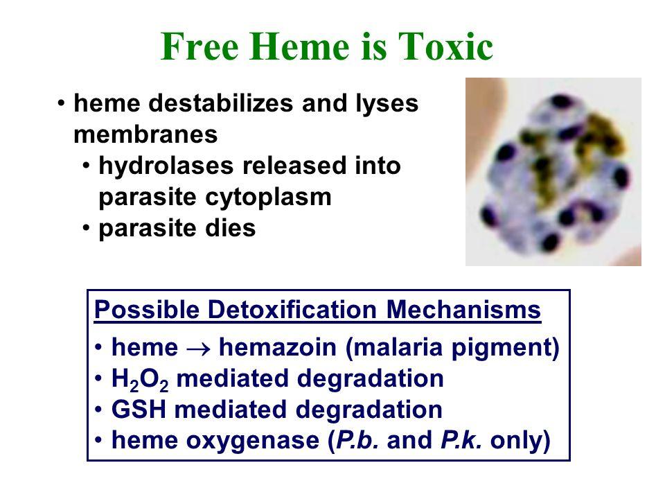 Free Heme is Toxic heme destabilizes and lyses membranes