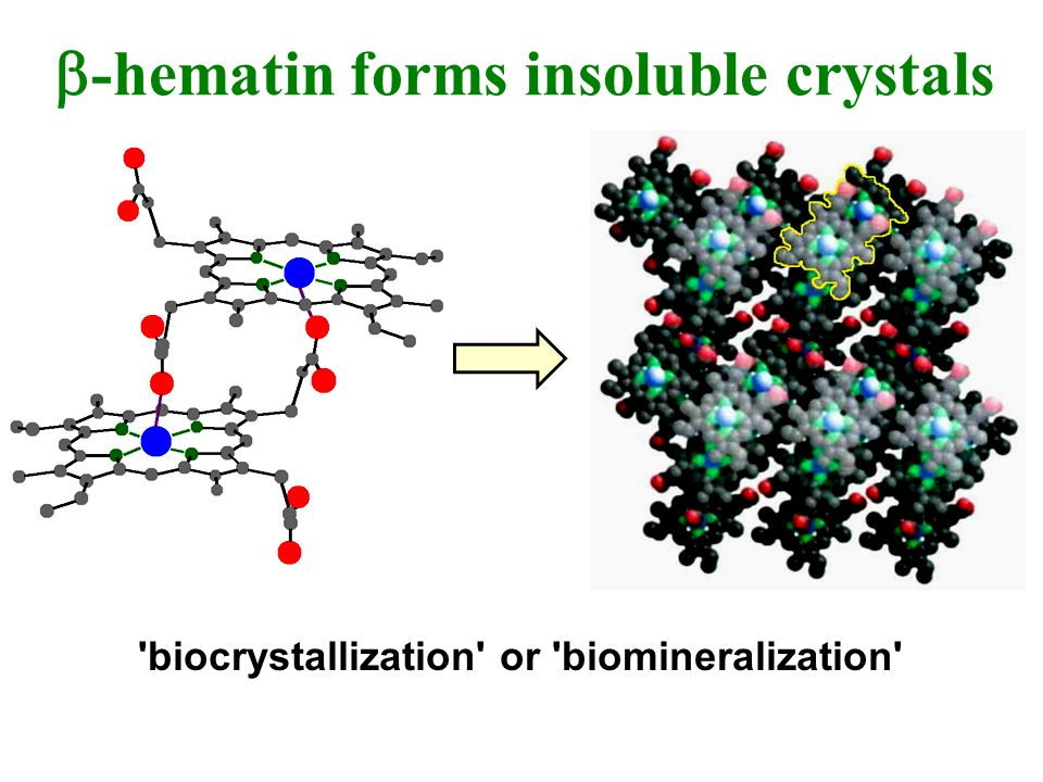b-hematin forms insoluble crystals