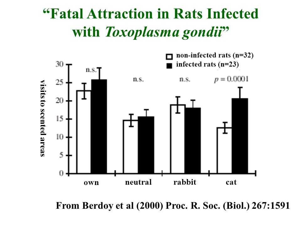 Fatal Attraction in Rats Infected with Toxoplasma gondii