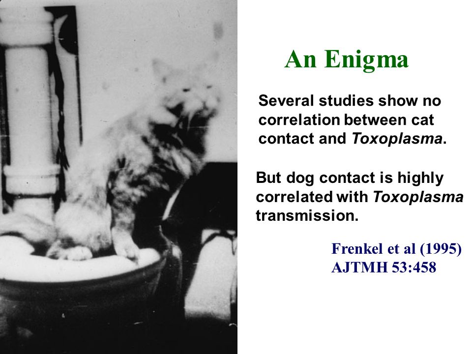 Frenkel et al (1995) AJTMH 53:458. But dog contact is highly correlated with Toxoplasma transmission.