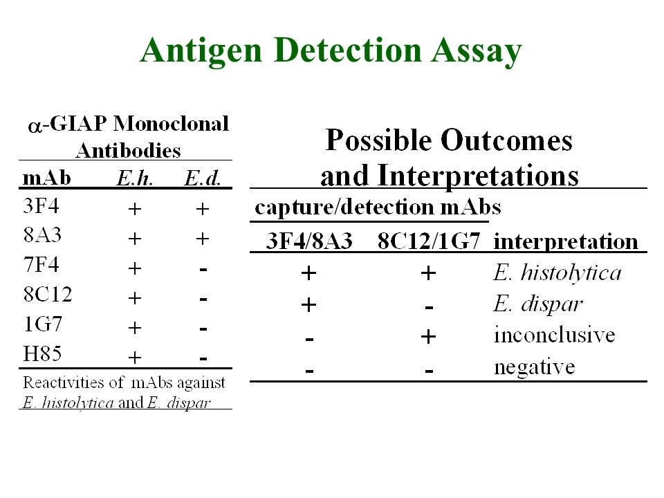 Antigen Detection Assay