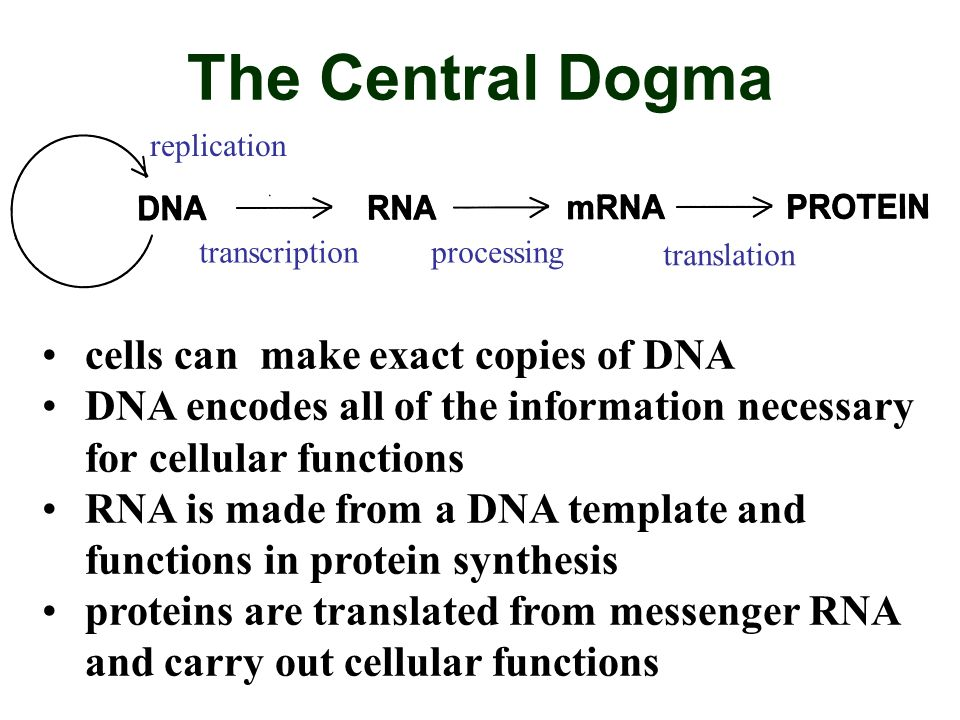 The Central Dogma cells can make exact copies of DNA