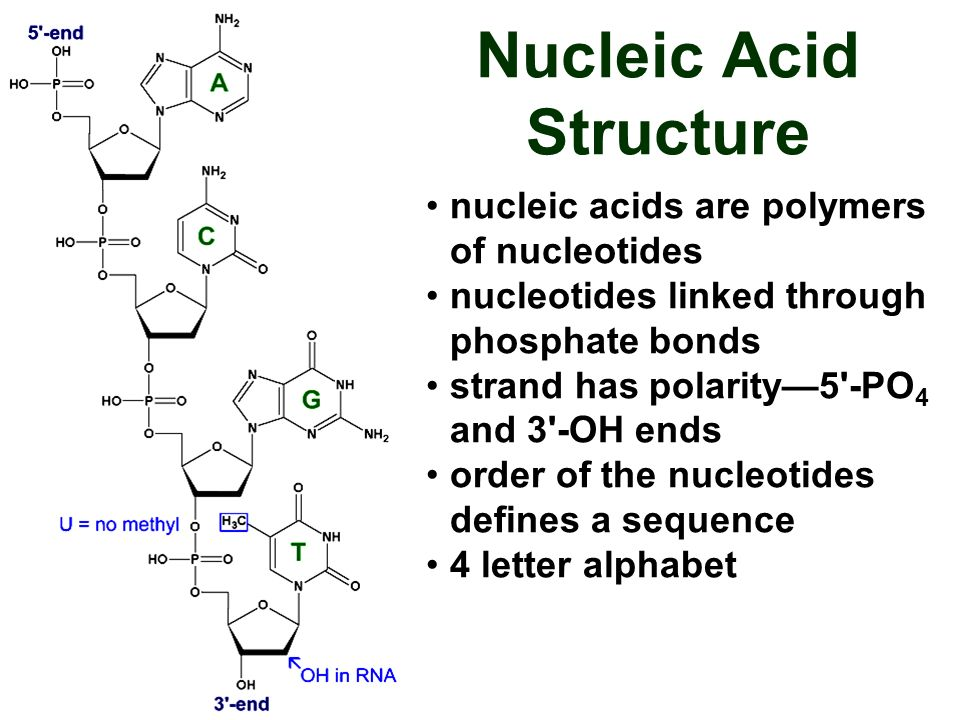 Nucleic Acid Structure Dna DNA Structure and Func...