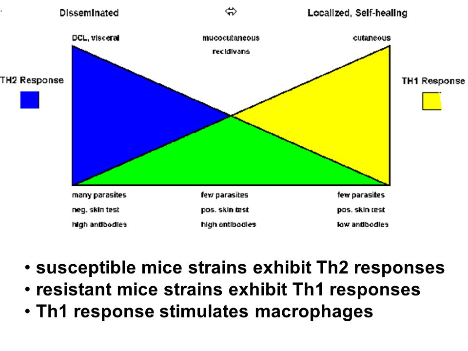 susceptible mice strains exhibit Th2 responses