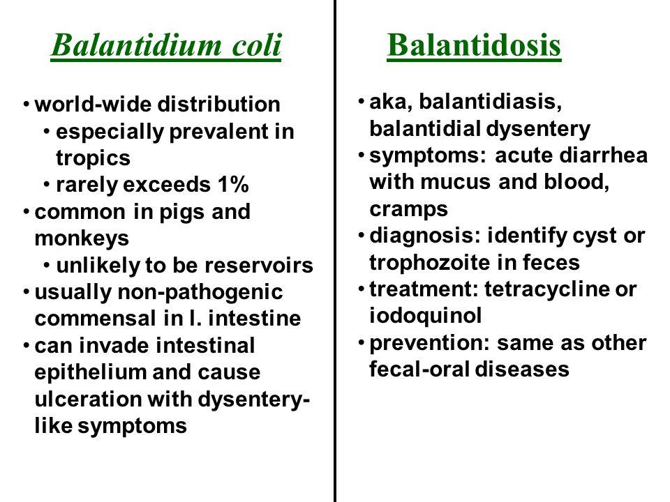 Balantidium coli Balantidosis