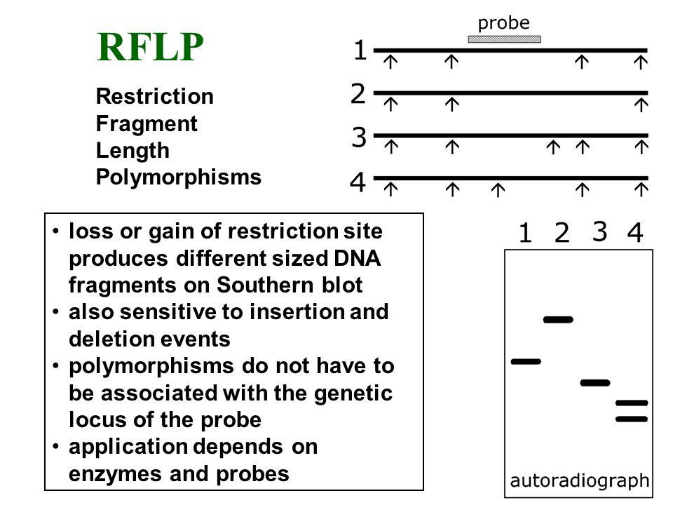 RFLP Restriction Fragment Length Polymorphisms