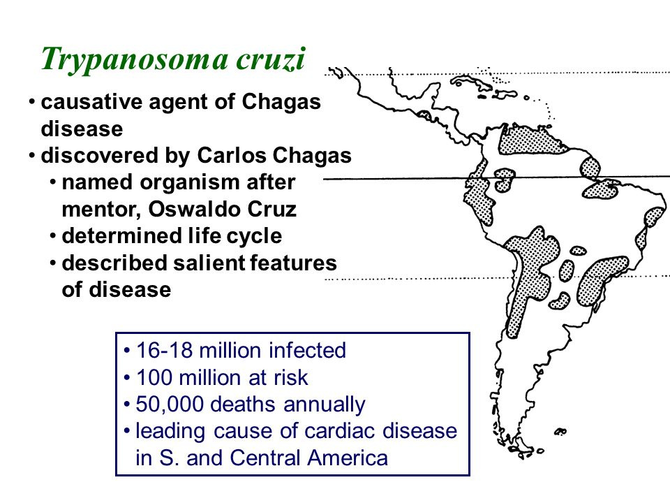 Trypanosoma cruzi causative agent of Chagas disease