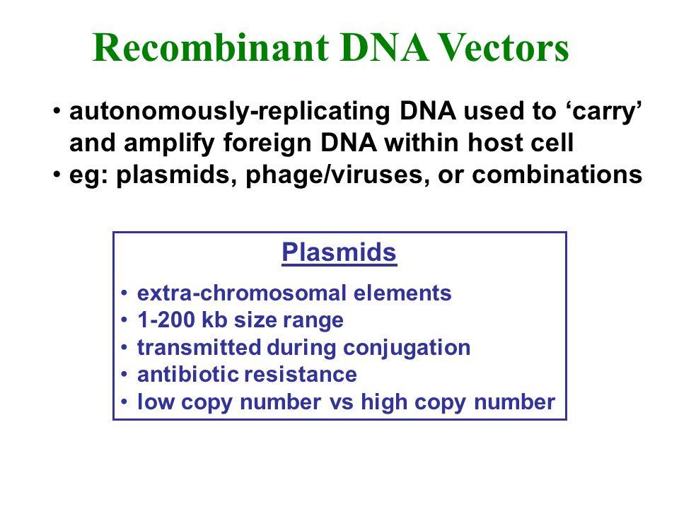 Recombinant DNA Vectors