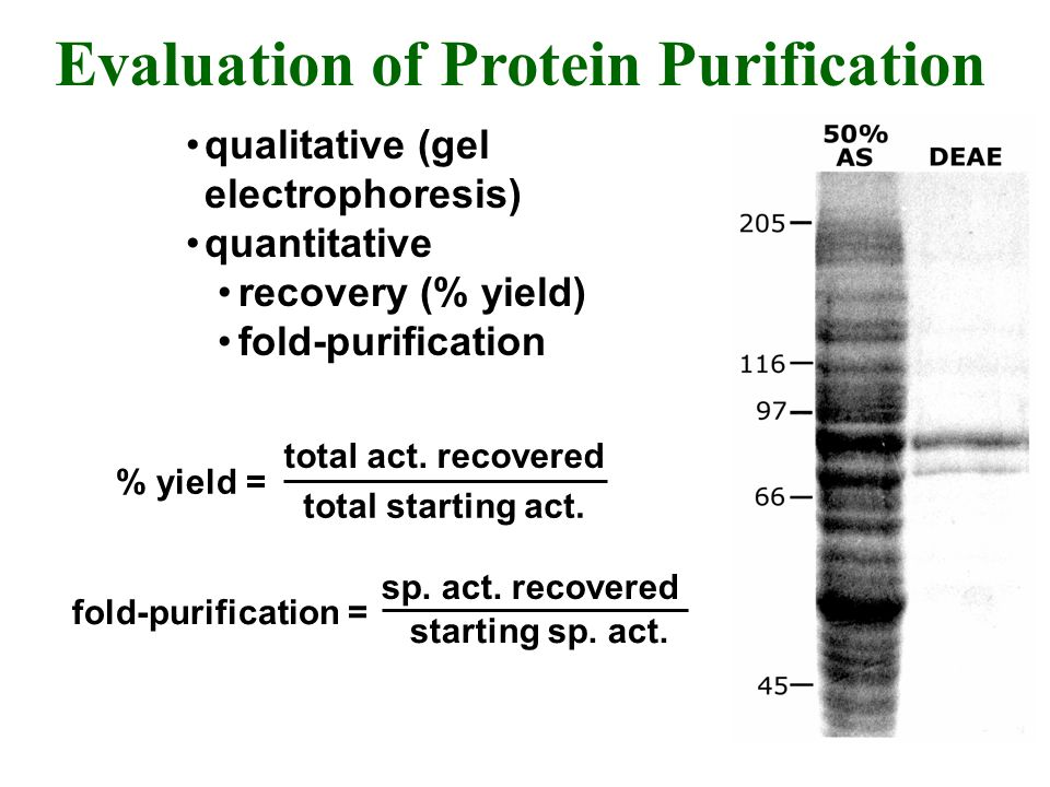 Evaluation of Protein Purification