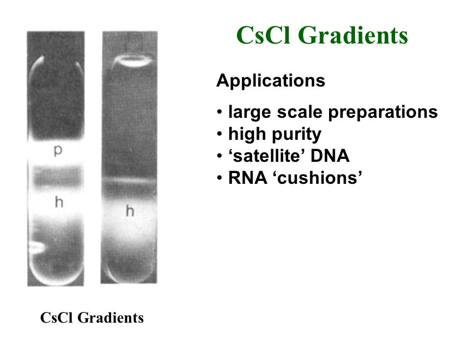 CsCl Gradients Applications large scale preparations high purity