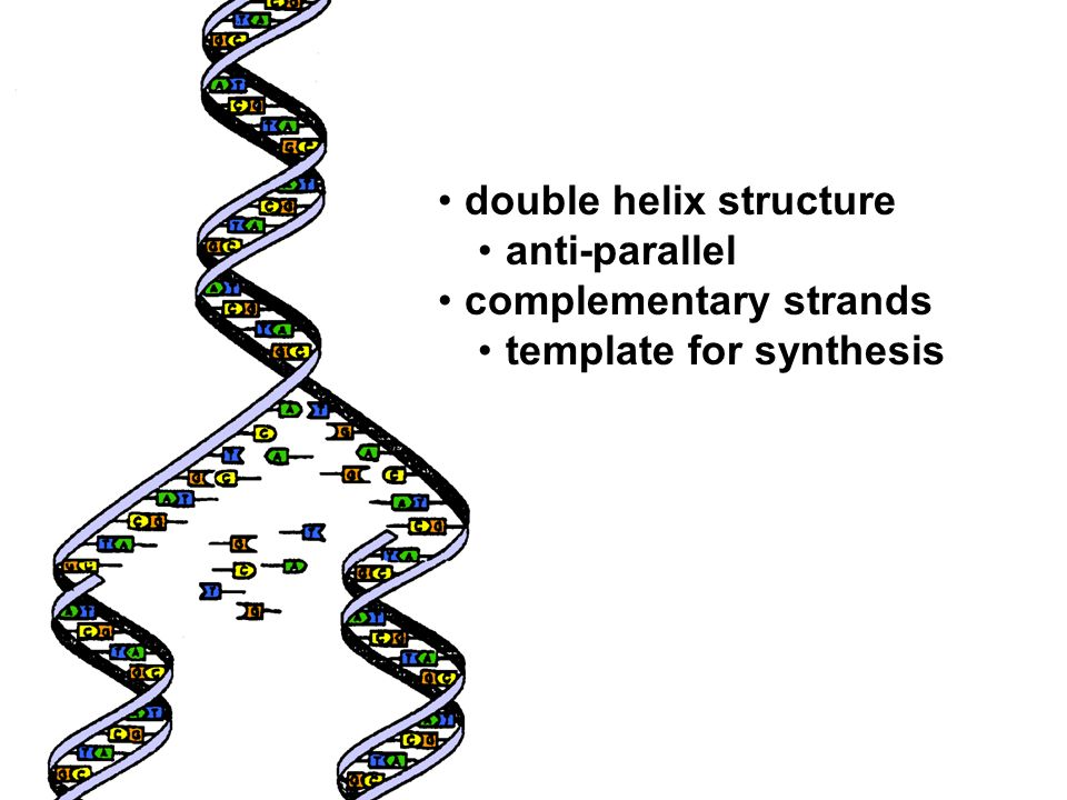 double helix structure