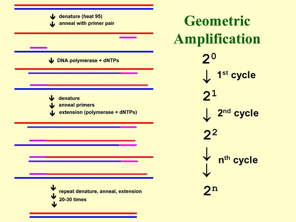 Geometric Amplification