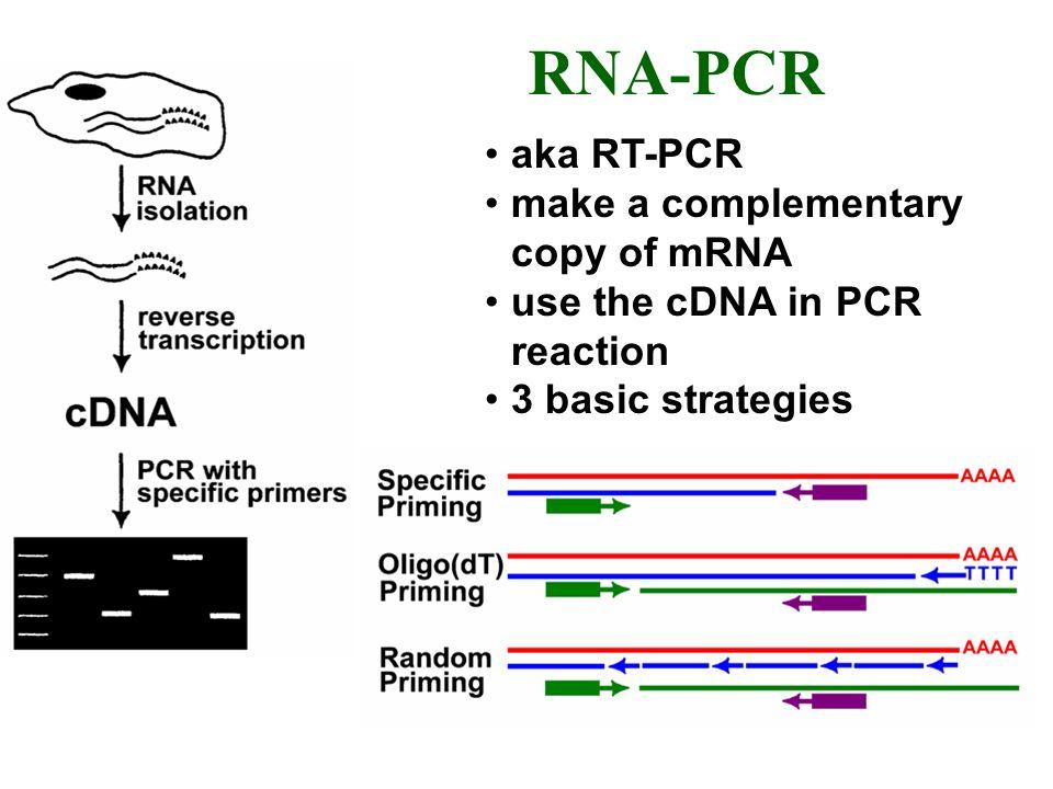 RNA-PCR aka RT-PCR make a complementary copy of mRNA