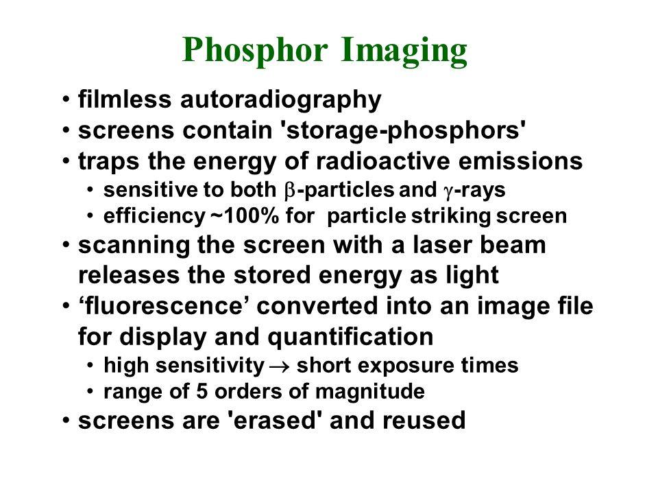 Phosphor Imaging filmless autoradiography