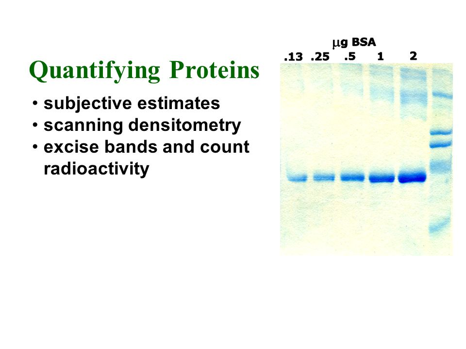 Quantifying Proteins subjective estimates scanning densitometry
