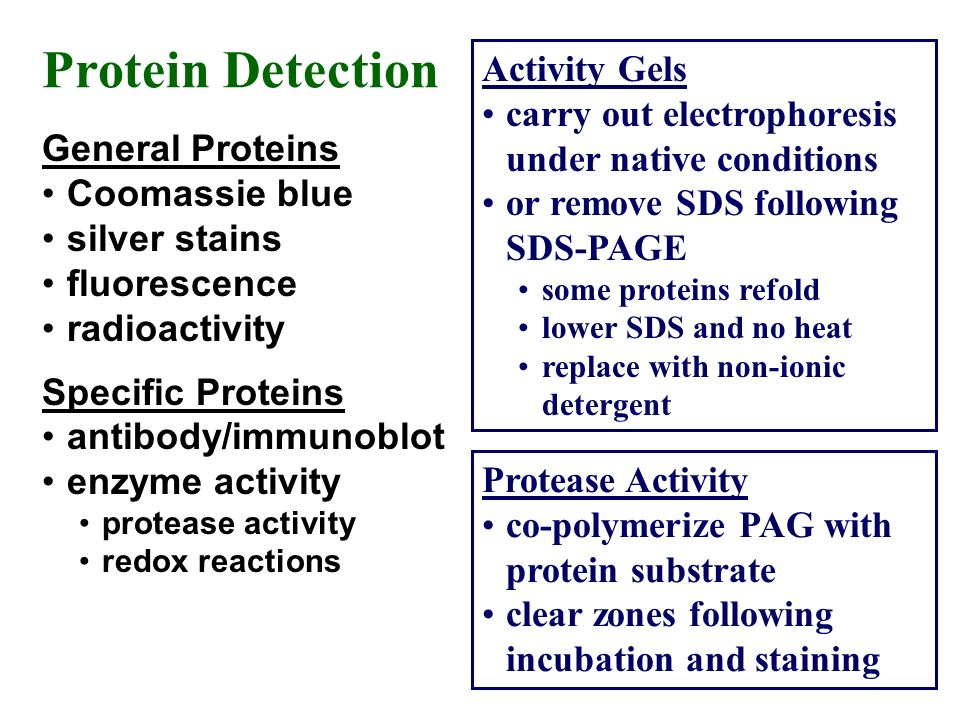 Protein Detection Activity Gels